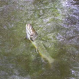 釣行      2009/06/15 6:39のサムネイル