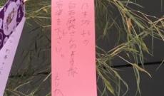 【乃木坂46】短冊に「白石麻衣さんの容姿を下さい」【画像あり】