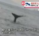東京湾にクジラ