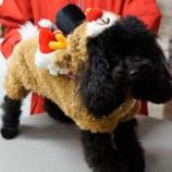 『トナカイ&来年の干支 愛犬をかわいく着せ替えして撮影しませんか?』の画像
