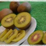 『酸っぱいイメージを覆す!梨農家が本気で手掛けた奇跡のキウイフルーツ』の画像