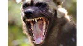 【アメリカ】動物園で肉食獣リカオンの舎内に男児が転落 かまれて死亡