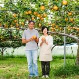 『【行田のお店紹介】樹上完熟の本物の味をお届けしたい!「はせがわ農園」』の画像