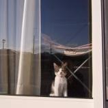『玄関や窓が凶家相だった場合の対処法』の画像