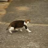『松島のネコ』の画像
