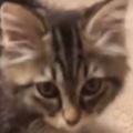 子ネコがこっちにやってきた。これは毛玉の怪獣ですか? ドラゴンですか? → 子猫の鳴き声はこんな感じ…