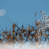 『冬のほたる』の画像