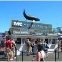 ボストン クジラ&North Endの街並