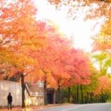 『三色彩道(2015年11月11日)の紅葉実況とバリアフリー事情~2015年11月11日~』の画像