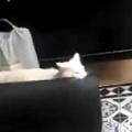 お隣さんちのネコがうちの中にいた。これ、もらっていきますね~♪ → 泥棒猫でした…