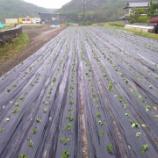 『畑の記録0516』の画像