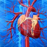 『COVIDワクチンに対する心臓障害について詳細リスト(患者死亡134例を含む)2021.2.16 by CHD Team』の画像