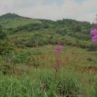 『後編:湿原の草原トレイル霧ヶ峰』の画像