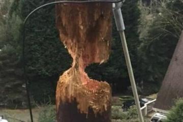 【画像】キツツキのせいで倒壊寸前の木製電柱がwww