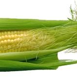 『捨てない食材:トウモロコシのヒゲの効能』の画像