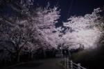 松寶寺付近の桜を夕暮れから日没まで撮影してみた!近くの公園でライトアップもされていてとっても綺麗~交野タイムズがオススメする地元の桜スポット~