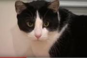 【アメリカ】野生のコヨーテ3匹を猫が撃退! 「クレイジーキャット」現る
