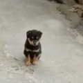 子イヌがちょこんと座っていた。ゴハンの時間だよ♪ → 犬たちは階段でこうなります…