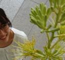 """1年前に花屋で買ったアガベが……""""奇跡の""""開花 100年に一度「ぜひ見に来て」 那須塩原"""