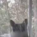 ネコが窓辺にやってきた。よっこらしょ♪ → お気に入りの場所でこうなります…
