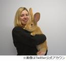 巨大ウサギが飼い主を募集中、犬並みに成長で「飼いきれない」と施設へ