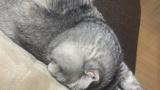 【悲報】うちの猫、おっさんだった(※画像あり)