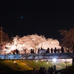 6Dを持って夜のお花見(3日連続)