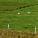 『アイスランド旅行記9 【世界遺産】世界で2か所しか見られない地球の裂け目、シングヴェトリル国立公園のギャウ、そしてオーロラは・・・』の画像