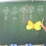 『3年生・昆虫の模型を作ると構造を理解できる』の画像
