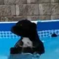 イヌがプールに入って遊んでいた。もう出なさい! いやだワン♪ → 飼い主とのたたかいが始まった…