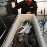 『11月18日(日) 釣果 テンヤ・ライトジギング・スロージギング 12魚種でした。 クロソイ、寒ヒラメ好調!!』の画像