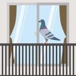 『マンションのベランダの鳩よけネット設置費用は、個人負担なの?』の画像