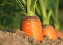 身近な野菜や果物や食品添加物のうんちくを農学部出身の俺が語るスレ