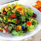 『今が蒔き時!植物を育てたくなるキッチン菜園&ガーデニングアイデア 2/2』の画像
