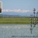 『ありし日偲ぶ』の画像