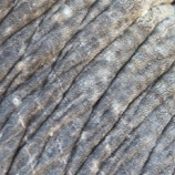 『ゾウの行動範囲』の画像