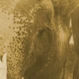 『「修身斉家治国平天下」パーム油生産地での野生動物たちの通行権利』の画像
