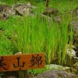 『美山錦』の画像
