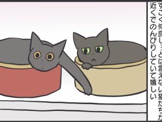 猫の喧嘩を仲裁した結果