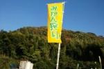 神宮寺はぶどうが有名だけど実はみかんも人気!〜金澤みかん園は10月18日からみかん狩りスタート!〜