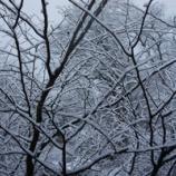 『水っぽい雪』の画像