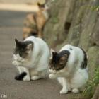 『【ネコ】ぶさかわいい表情のネコ「ぶさにゃん」』の画像