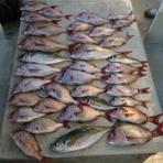 明石釣り船たかみまるの釣果blog