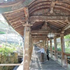 長谷寺のツツジ