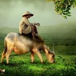 『【ベトナム株】米中貿易戦争で漁夫の利を得るベトナム株は2020年以降の有望株か』の画像