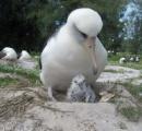 世界最高齢のコアホウドリ、68歳で産んだヒナがかえる