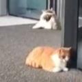 2匹の猫が店の入り口にいた。回転ドアがく~るくる♪ → 1匹の猫はこんな感じ…