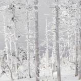 『静かな森の中』の画像
