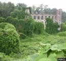 イギリス、竹を庭に植えるブーム到来→繁殖力がすごくて社会問題化