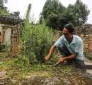 世界遺産に登録された中国の墓、23世代にわたり墓守を務めてきた一族が失業の危機に!